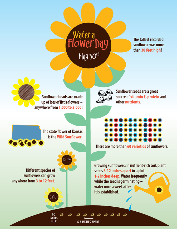 water a flower day sunflower infographic lapetite academy