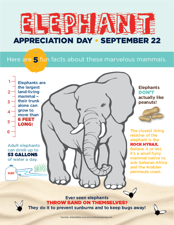 Fun Facts About Elephants for Elephant Appreciation Day!